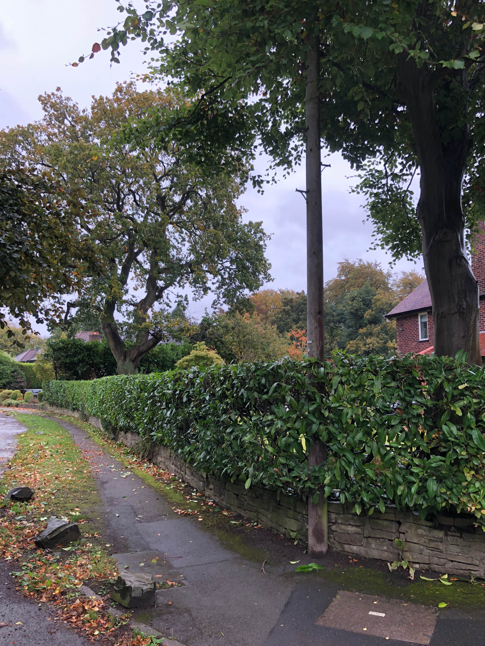 Hedge trimming and crown reducing Knutsford Cheshire 6