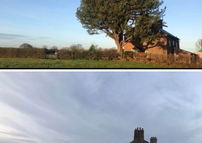 17122018 pine tree felling Ashley Manchester 11