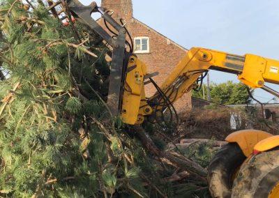 17122018 pine tree felling Ashley Manchester 6