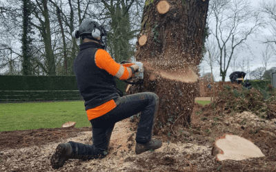 Tree surgery and removal in Manchester and Cheshire