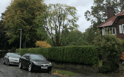 Arborist services in Manchester and Cheshire