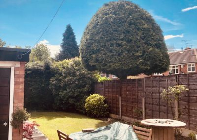 Precision trimming & shaping in Cheshire – 10.05.2019.