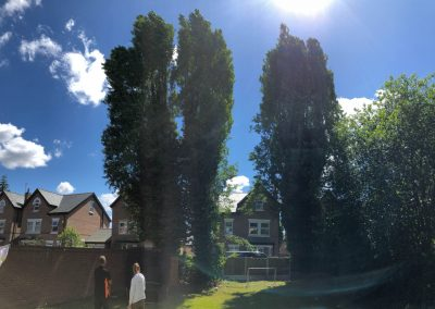 27062019 tree felling sale manchester 1