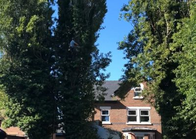 27062019 tree felling sale manchester 3