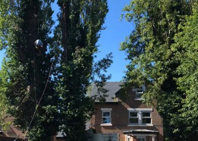 27062019 tree felling sale manchester 4