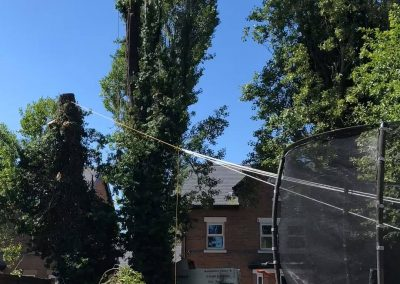 27062019 tree felling sale manchester 6