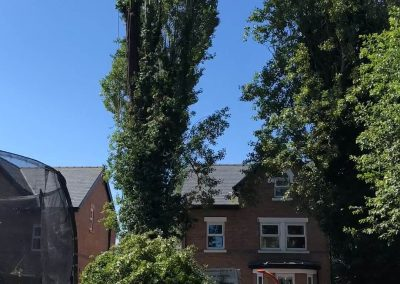 27062019 tree felling sale manchester 7