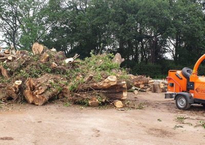 Tree cutting and removal in Sale, Manchester – 27.06.2019.