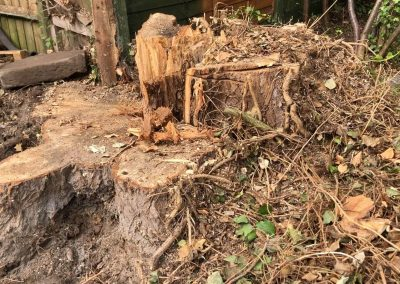 Stump grinding Sale, Manchester – 08.07.2019.