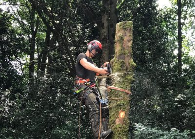 Large sycamore tree removal Prestwich, Manchester – 01.08.2019.