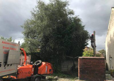 03092019 medium size sycamore tree removal Salford Eccles 4