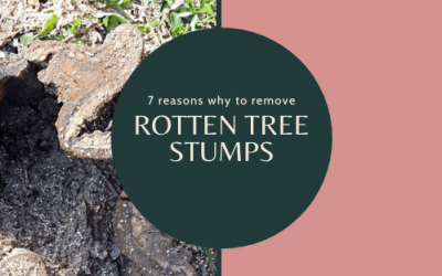 7 reasons why to remove a rotting tree stump