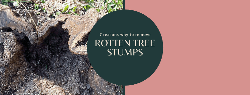 rotten tree stump cover