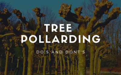 Tree Pollarding: Do's and Don'ts