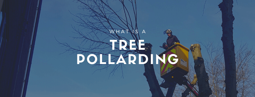 what is a tree pollarding cover