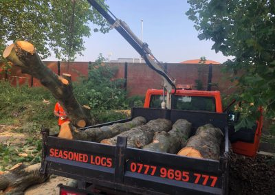 London plane tree felling Trafford park, Manchester – 27.08.2019.