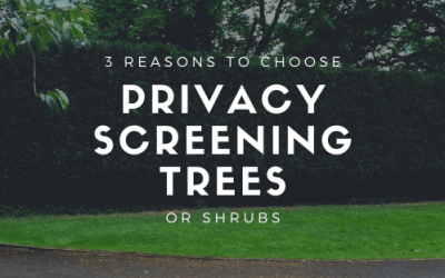 Top 3 reasons why people choose privacy screening trees and shrubs