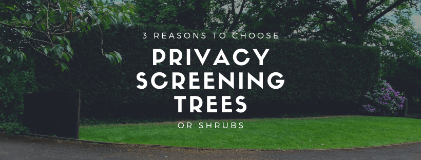 Top 3 reasons why people choose privacy screening trees and shrubs cover
